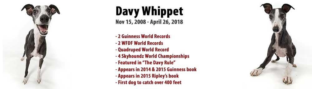 Davy Whippet